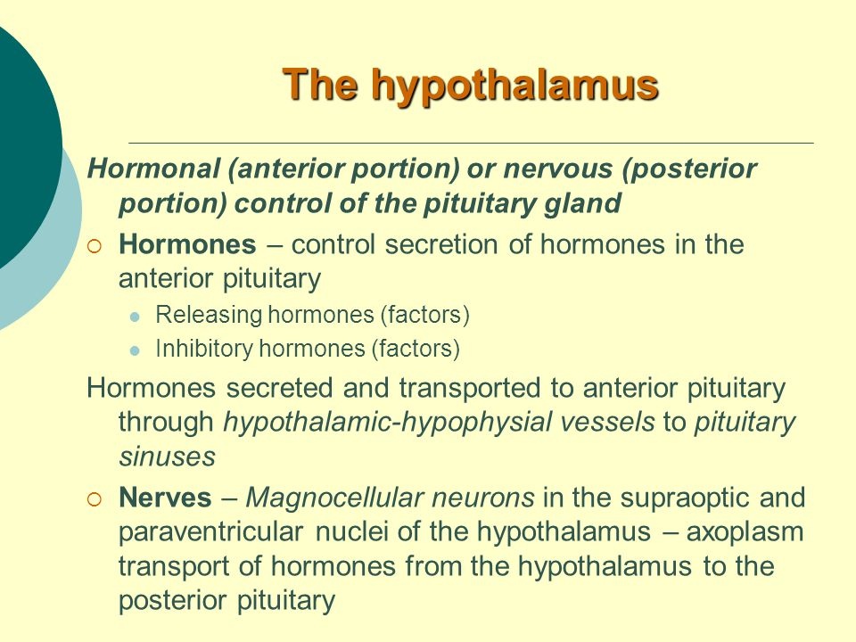 The hypothalamus Hormonal (anterior portion) or nervous (posterior portion) control of the pituitary gland  Hormones – control secretion of hormones