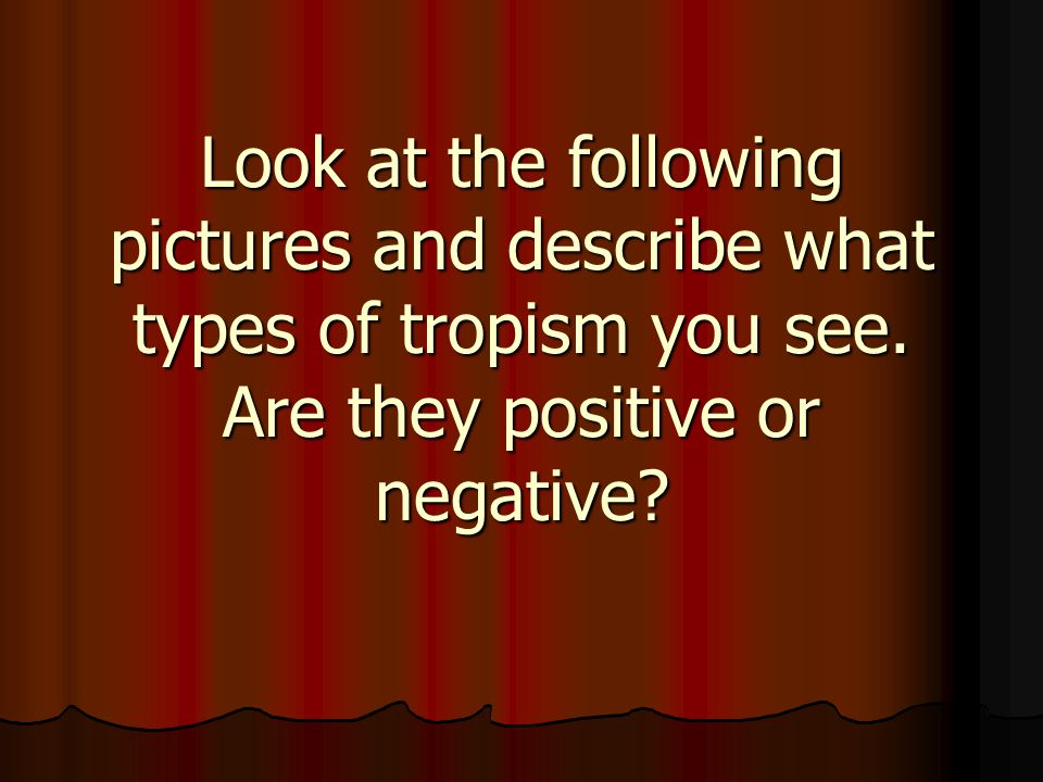 Look at the following pictures and describe what types of tropism you see. Are they positive or negative?