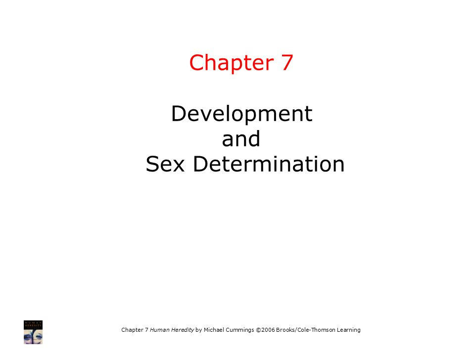 Chapter 7 Human Heredity by Michael Cummings ©2006 Brooks/Cole-Thomson Learning Chapter 7 Development and Sex Determination