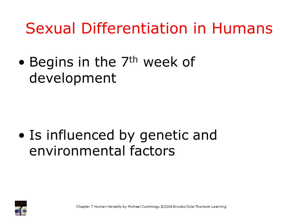 Chapter 7 Human Heredity by Michael Cummings ©2006 Brooks/Cole-Thomson Learning Sexual Differentiation in Humans Begins in the 7 th week of development Is influenced by genetic and environmental factors