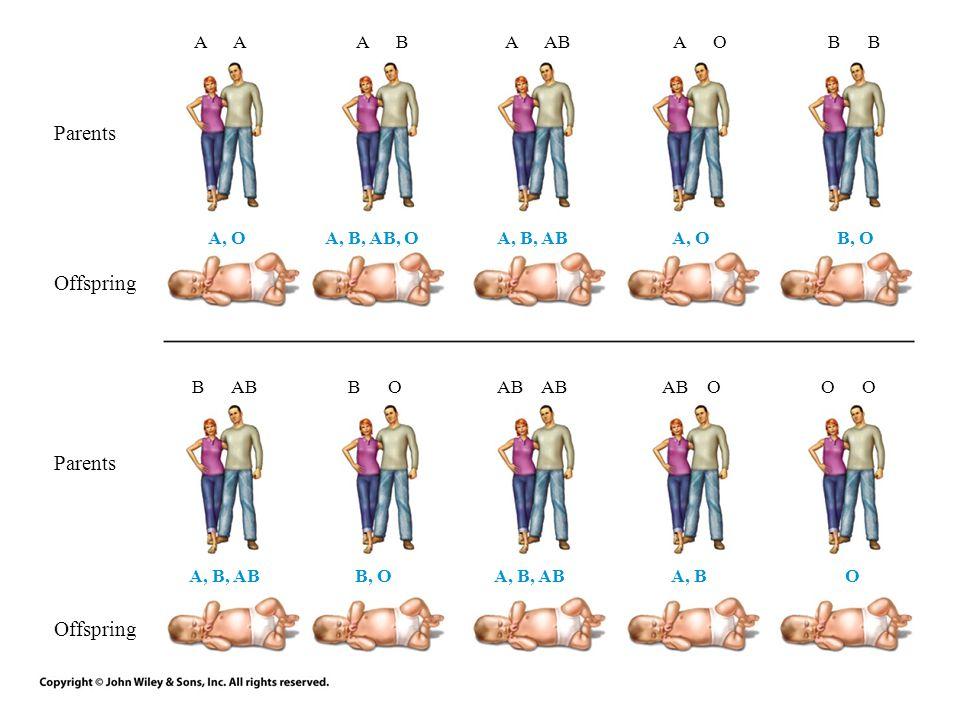 A A BA ABA OB B ABB OAB AB OO Parents Offspring A, OA, B, AB, OA, B, ABA, OB, O A, B, ABB, OA, B, ABA, BO