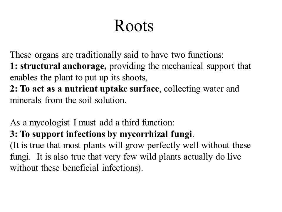 Roots These organs are traditionally said to have two functions: 1: structural anchorage, providing the mechanical support that enables the plant to put up its shoots, 2: To act as a nutrient uptake surface, collecting water and minerals from the soil solution.