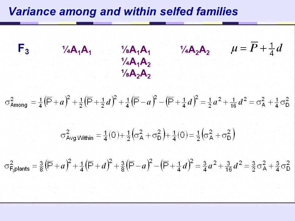 Variance among and within selfed families ¼A 1 A 1 ⅛A 1 A 1 ¼A 2 A 2 ¼A 1 A 2 ⅛A 2 A 2 F3F3