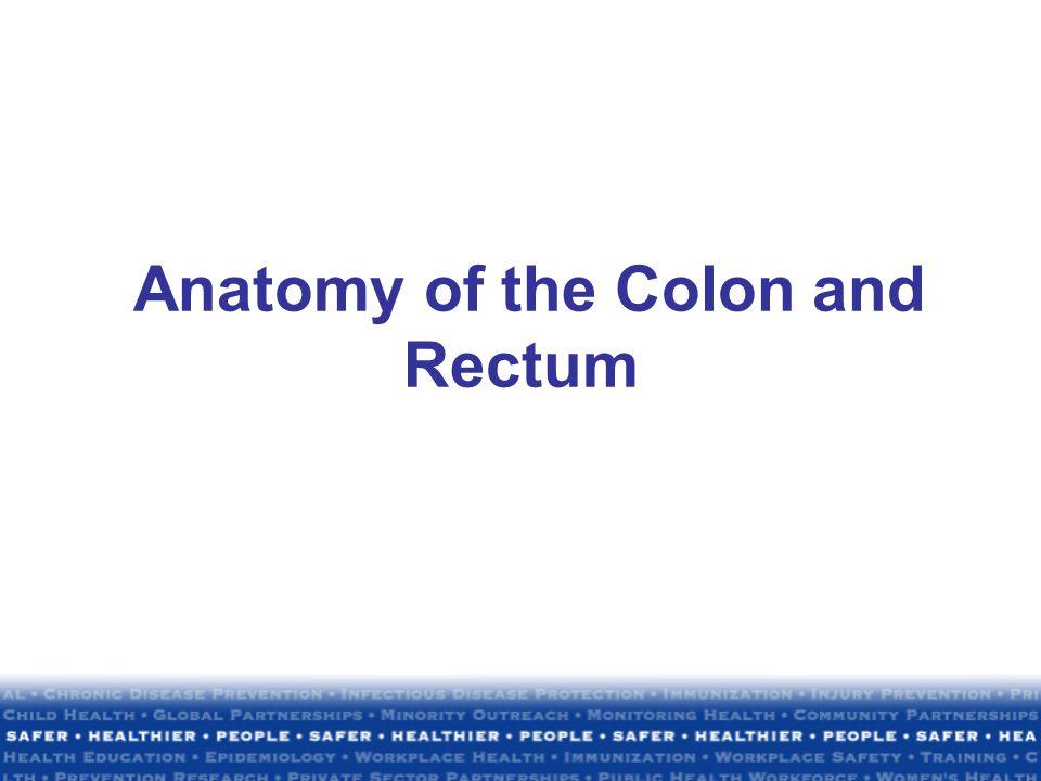 Anatomy of the Colon and Rectum