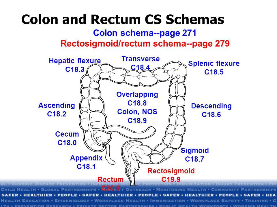Colon and Rectum CS Schemas Overlapping C18.8 Colon, NOS C18.9 Hepatic flexure C18.3 Cecum C18.0 Ascending C18.2 Transverse C18.4 Splenic flexure C18.5 Descending C18.6 Sigmoid C18.7 Rectum C20.9 Rectosigmoid C19.9 Appendix C18.1 Colon schema--page 271 Rectosigmoid/rectum schema--page 279