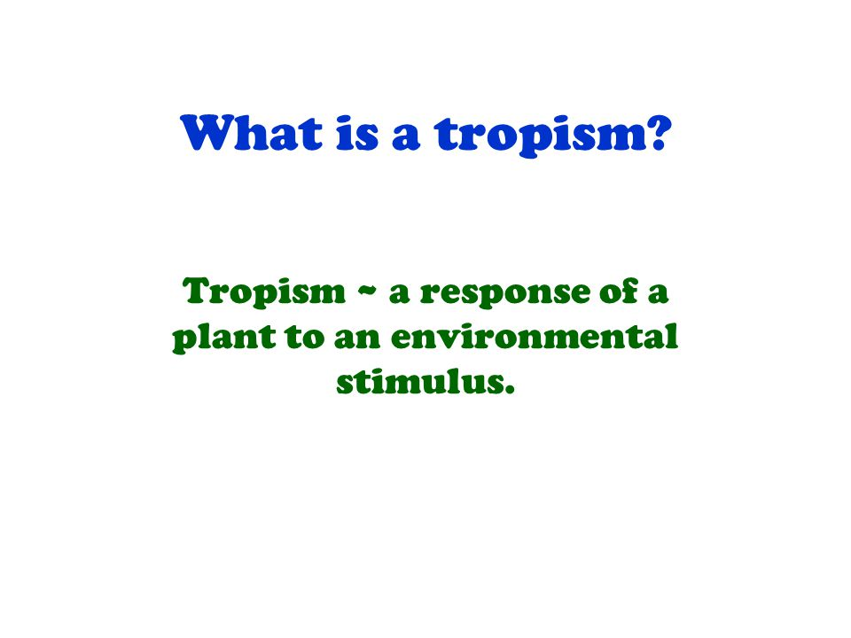 What is a tropism? Tropism ~ a response of a plant to an environmental stimulus.
