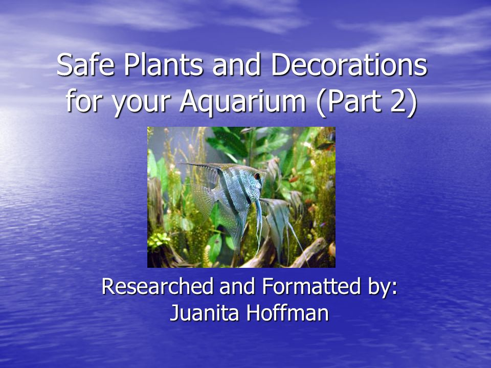 Refresher As we discussed in the last presentation choosing the proper substrate, lighting and carbon injection for your plants is necessary before you add any plants to your aquarium.