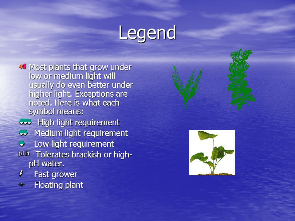 Legend Most plants that grow under low or medium light will usually do even better under higher light.