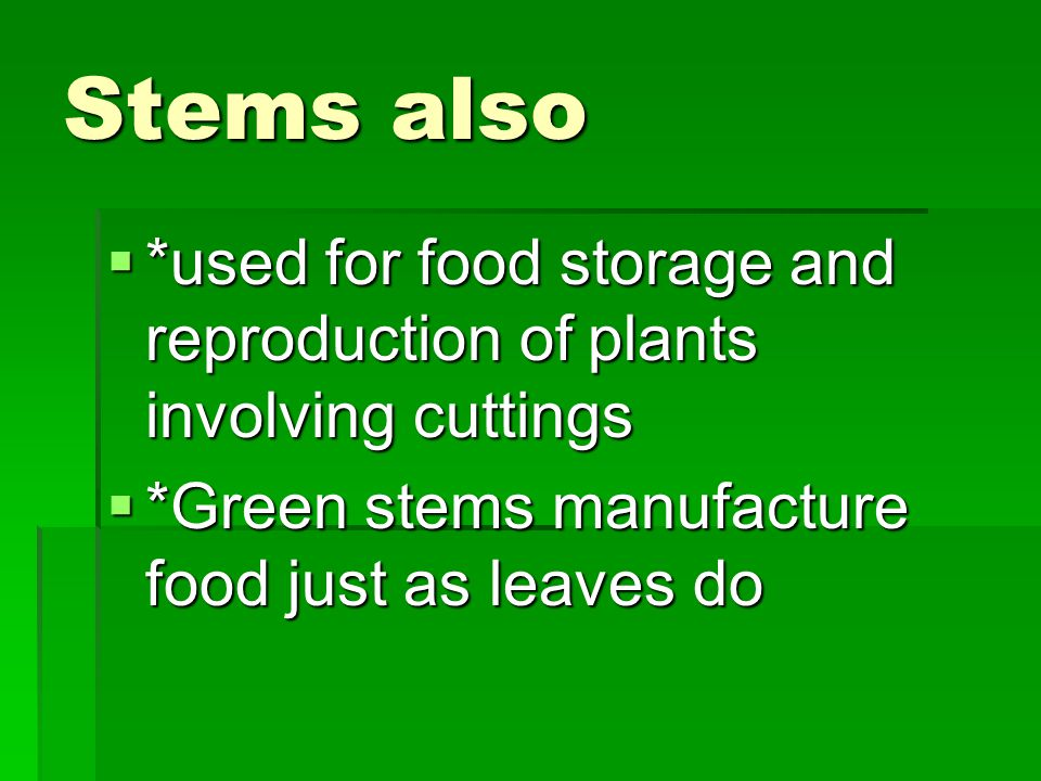 Stems also  *used for food storage and reproduction of plants involving cuttings  *Green stems manufacture food just as leaves do