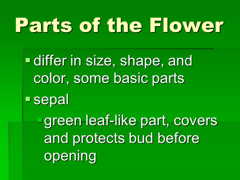 Parts of the Flower  differ in size, shape, and color, some basic parts  sepal  green leaf-like part, covers and protects bud before opening