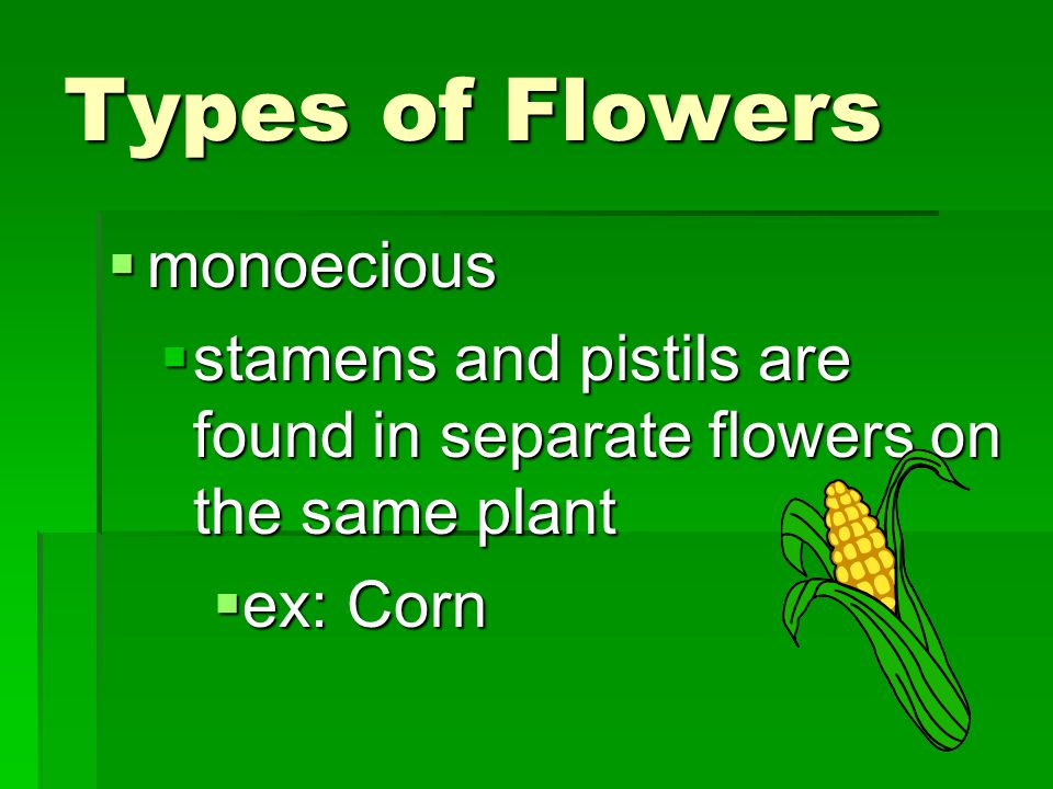 Types of Flowers  monoecious  stamens and pistils are found in separate flowers on the same plant  ex: Corn