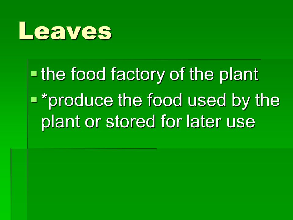 Leaves  the food factory of the plant  *produce the food used by the plant or stored for later use