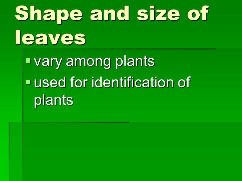 Shape and size of leaves  vary among plants  used for identification of plants