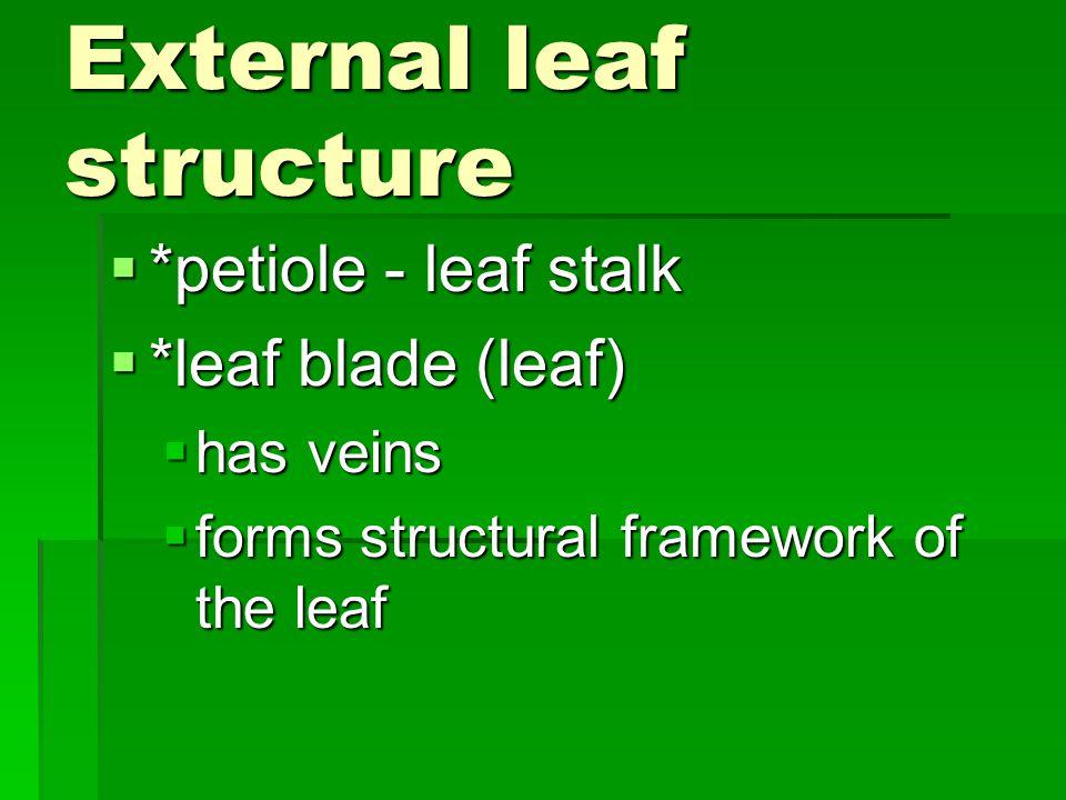 External leaf structure  *petiole - leaf stalk  *leaf blade (leaf)  has veins  forms structural framework of the leaf