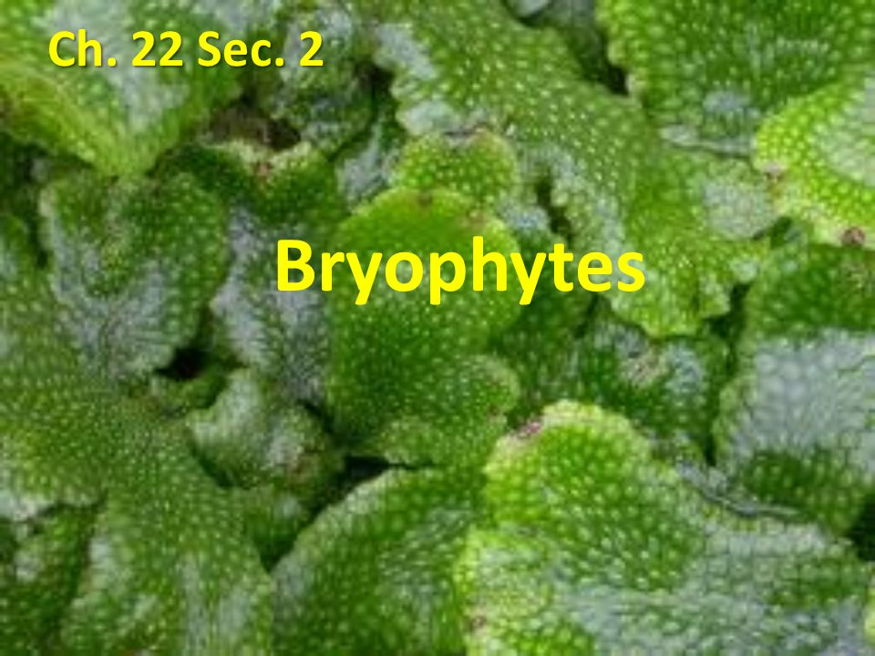II.Life Cycle of Bryophytes – Bryophytes reproduce and develop by alternation of generations.