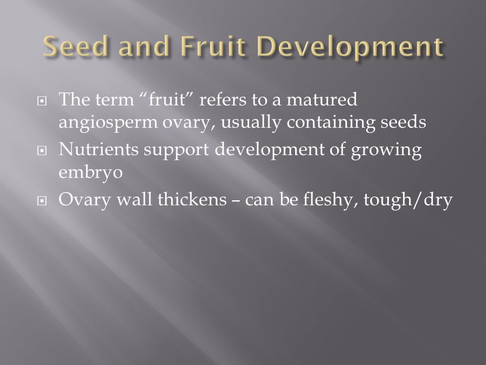 " The term ""fruit"" refers to a matured angiosperm ovary, usually containing seeds  Nutrients support development of growing embryo  Ovary wall thick"