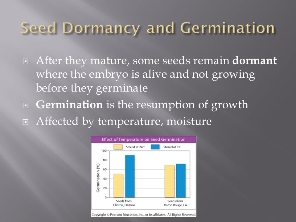  After they mature, some seeds remain dormant where the embryo is alive and not growing before they germinate  Germination is the resumption of grow