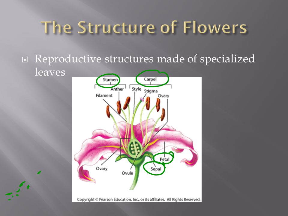  Reproductive structures made of specialized leaves
