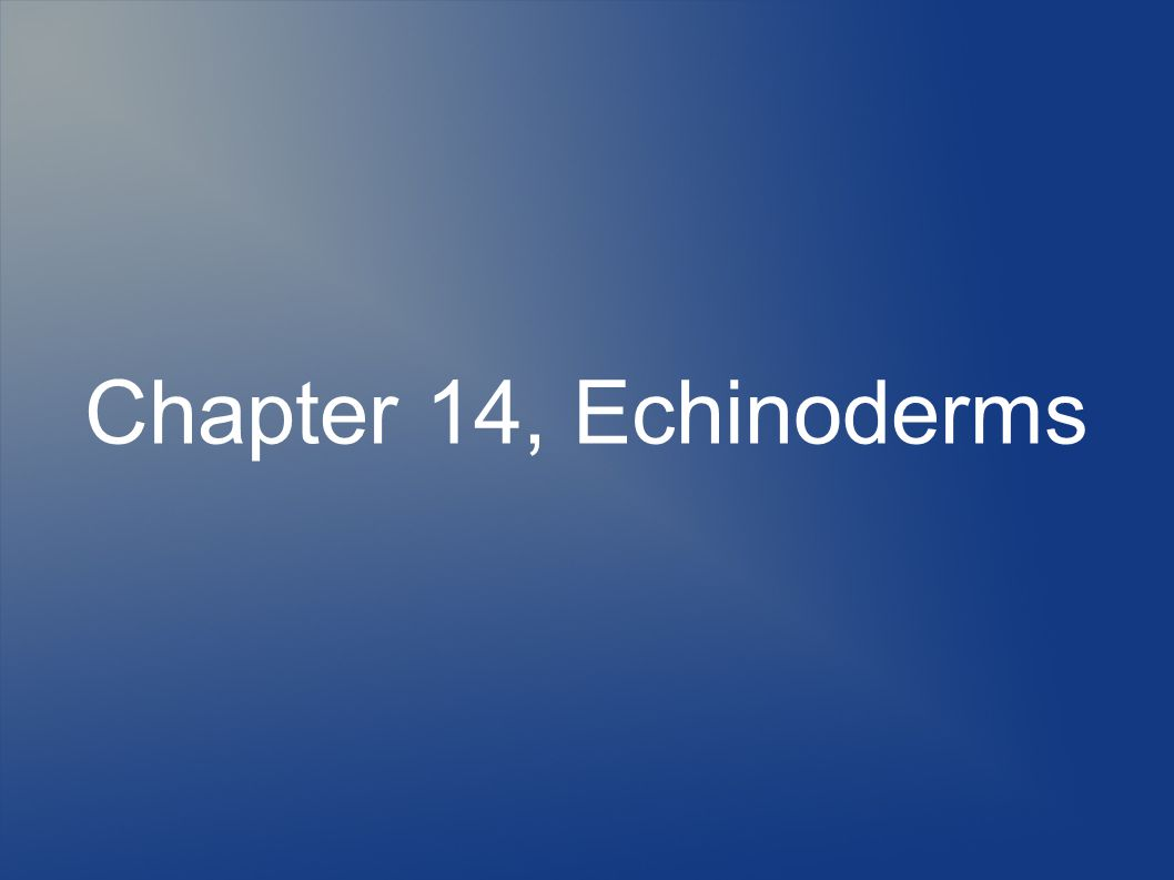 Chapter 14, Echinoderms