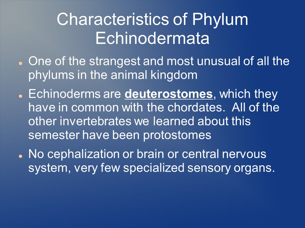 Characteristics of Phylum Echinodermata One of the strangest and most unusual of all the phylums in the animal kingdom Echinoderms are deuterostomes, which they have in common with the chordates.