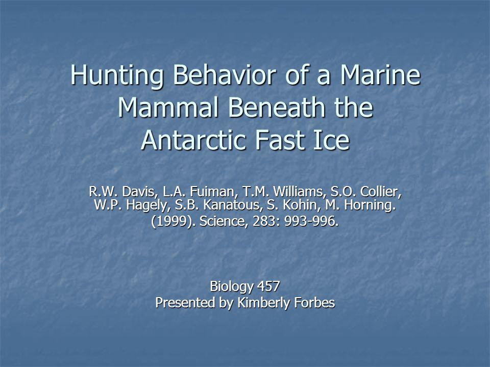 Hunting Behavior of a Marine Mammal Beneath the Antarctic Fast Ice R.W.
