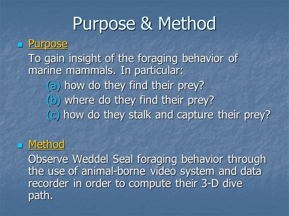 Purpose & Method Purpose Purpose To gain insight of the foraging behavior of marine mammals.