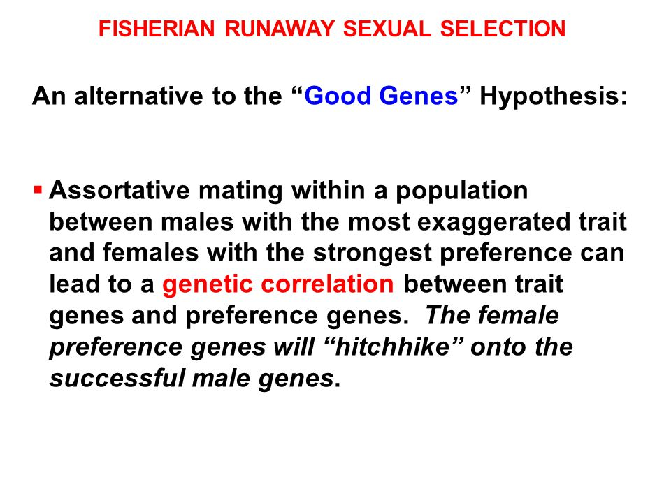 FISHERIAN RUNAWAY SEXUAL SELECTION An alternative to the Good Genes Hypothesis:  Assortative mating within a population between males with the most exaggerated trait and females with the strongest preference can lead to a genetic correlation between trait genes and preference genes.