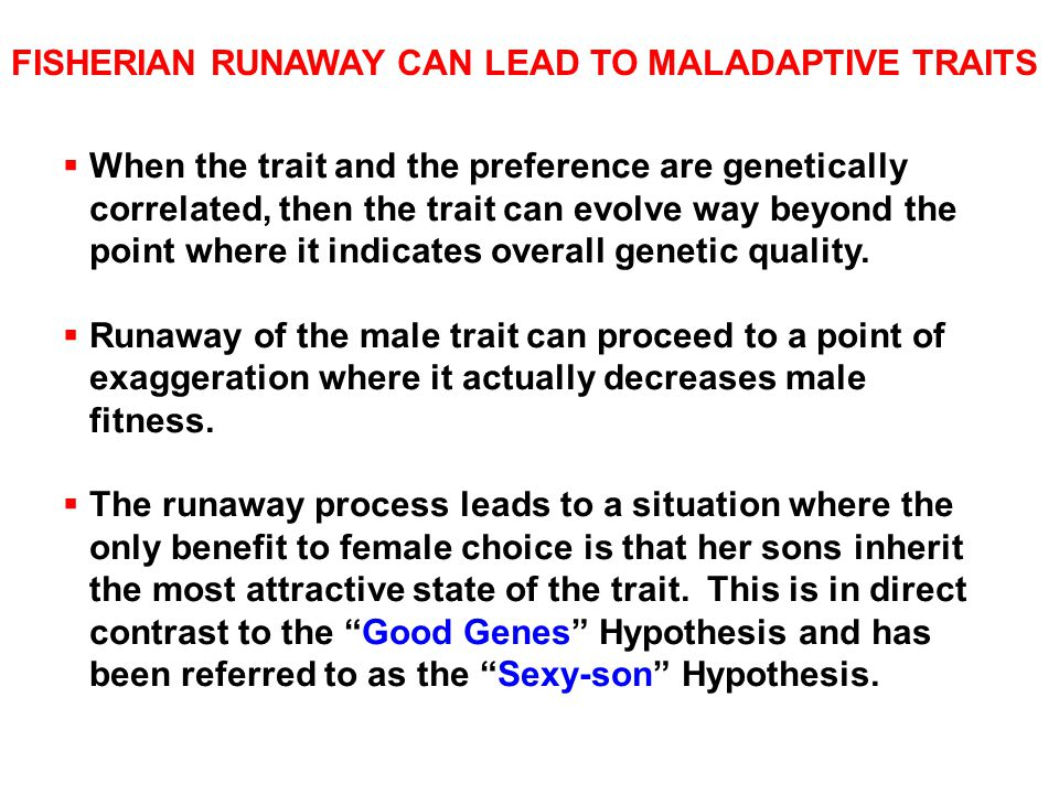 FISHERIAN RUNAWAY CAN LEAD TO MALADAPTIVE TRAITS  When the trait and the preference are genetically correlated, then the trait can evolve way beyond the point where it indicates overall genetic quality.