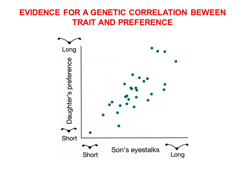 EVIDENCE FOR A GENETIC CORRELATION BEWEEN TRAIT AND PREFERENCE