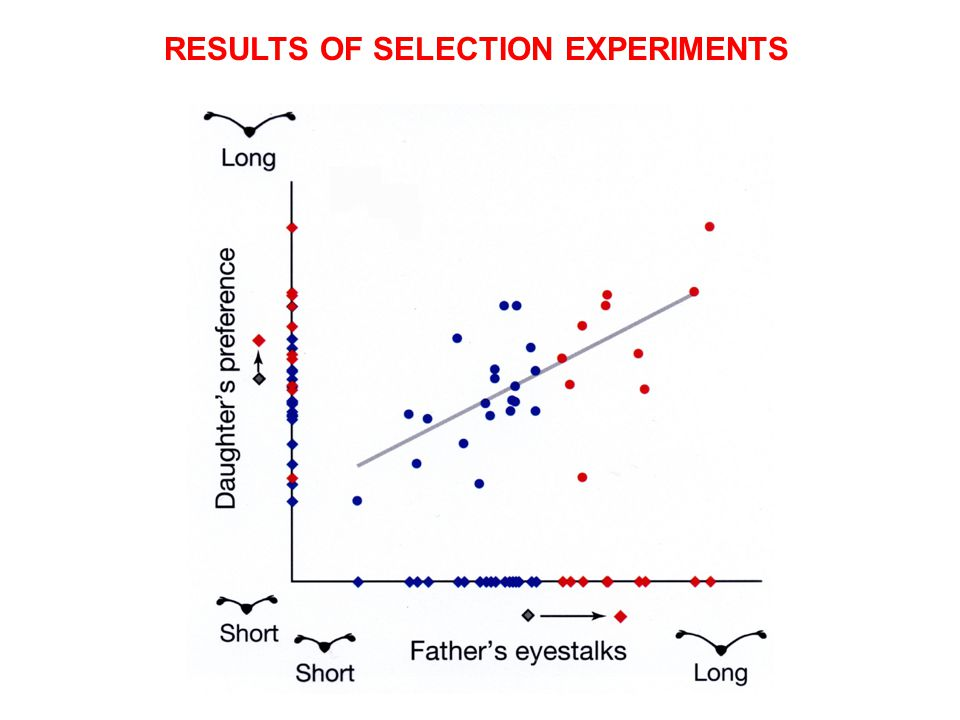 RESULTS OF SELECTION EXPERIMENTS