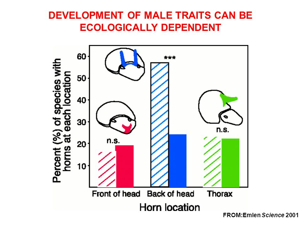 DEVELOPMENT OF MALE TRAITS CAN BE ECOLOGICALLY DEPENDENT