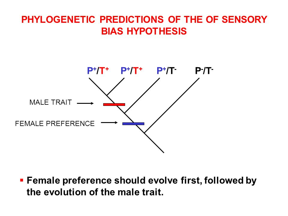 PHYLOGENETIC PREDICTIONS OF THE OF SENSORY BIAS HYPOTHESIS P+/T+P+/T+ P+/T+P+/T+ P+/T-P+/T- P - /T -  Female preference should evolve first, followed by the evolution of the male trait.