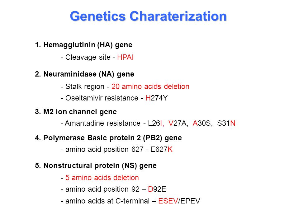 Genetics Charaterization 1. Hemagglutinin (HA) gene - Cleavage site - HPAI 2.