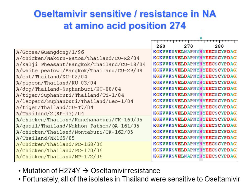 Oseltamivir sensitive / resistance in NA at amino acid position 274 Mutation of H274Y  Oseltamivir resistance Fortunately, all of the isolates in Thailand were sensitive to Oseltamivir