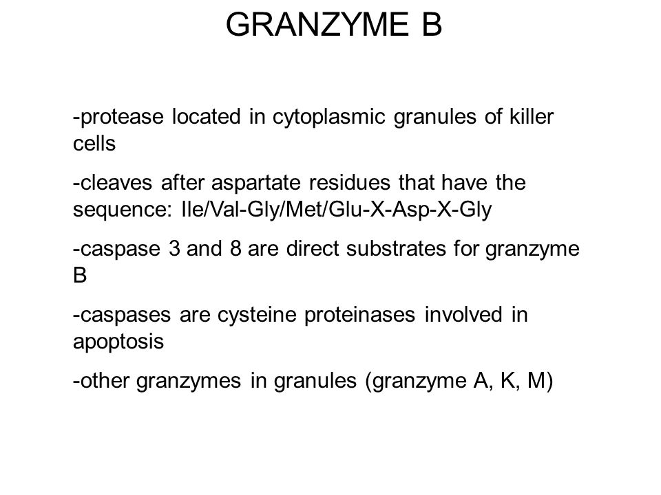 GRANZYME B -protease located in cytoplasmic granules of killer cells -cleaves after aspartate residues that have the sequence: Ile/Val-Gly/Met/Glu-X-A