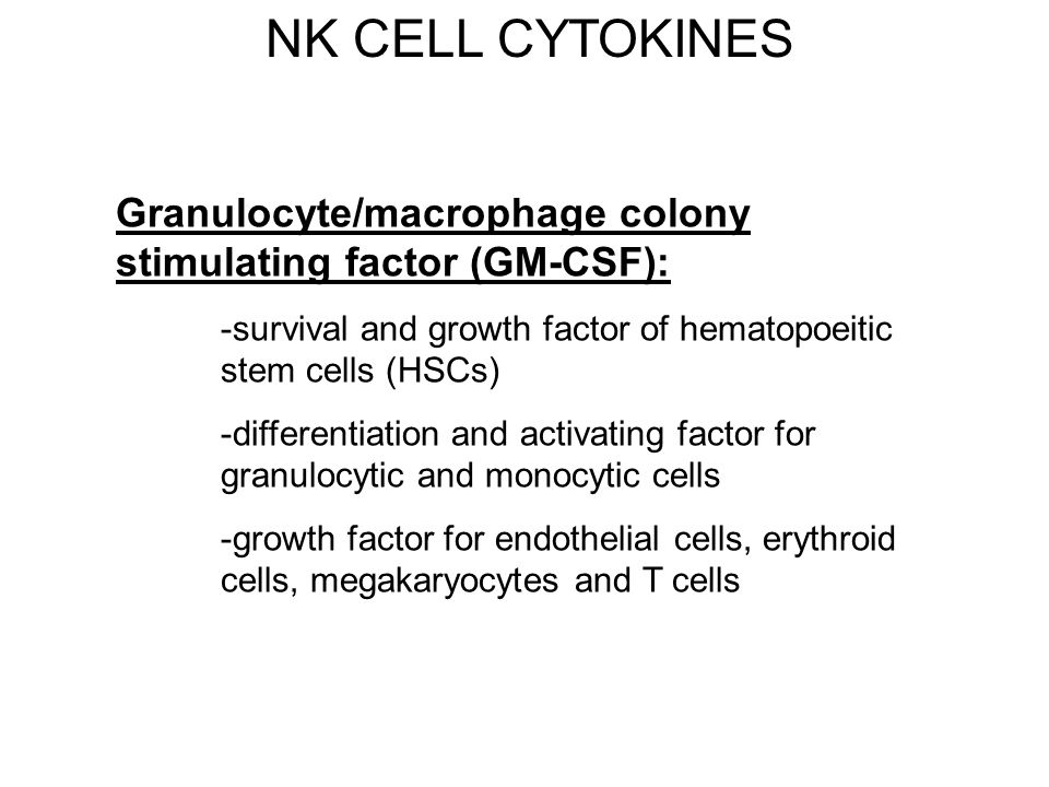 NK CELL CYTOKINES Granulocyte/macrophage colony stimulating factor (GM-CSF): -survival and growth factor of hematopoeitic stem cells (HSCs) -different