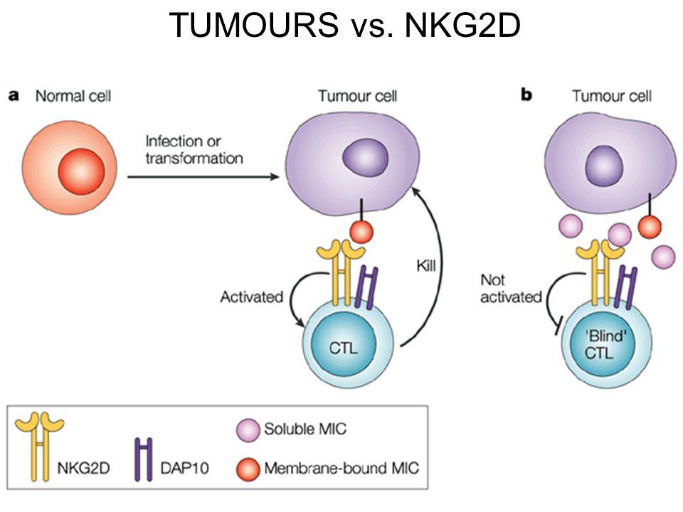TUMOURS vs. NKG2D