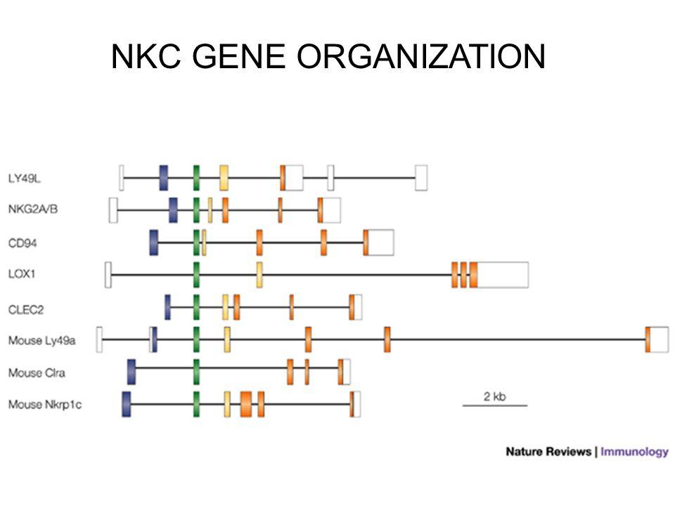 NKC GENE ORGANIZATION