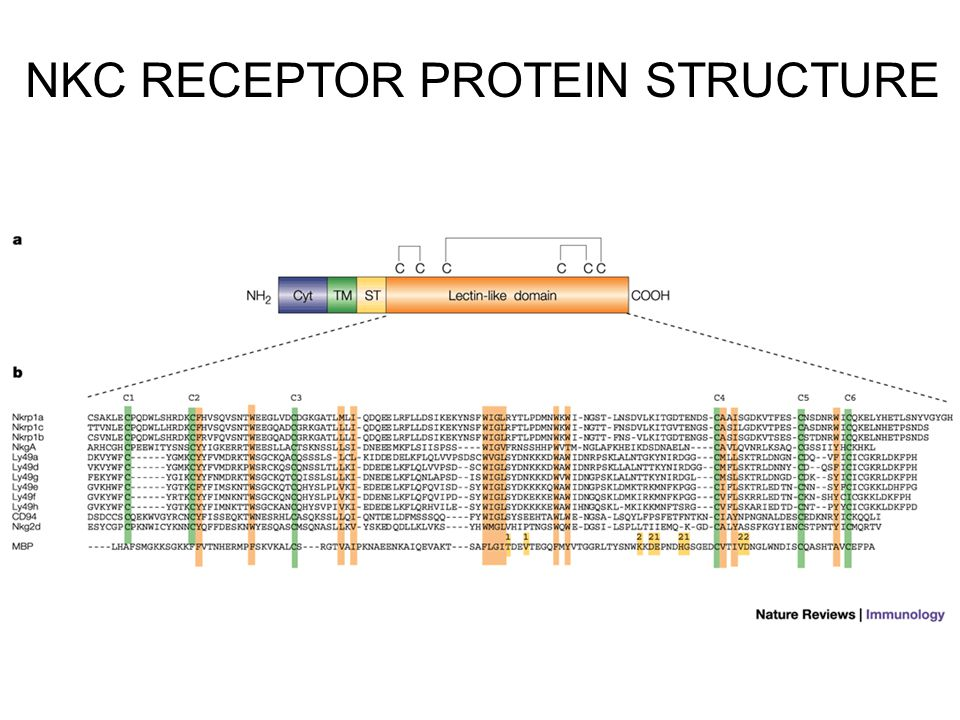 NKC RECEPTOR PROTEIN STRUCTURE