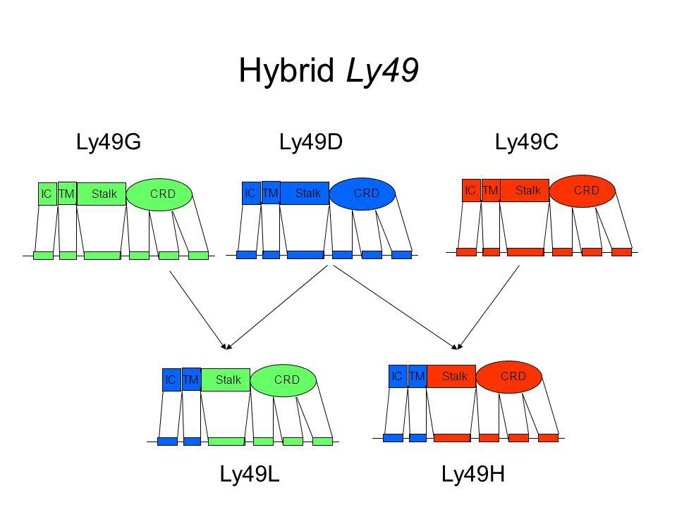 Hybrid Ly49 Stalk CRD TMIC Stalk CRD TMIC Stalk CRD TMIC Stalk CRD TM IC Stalk CRD TMIC Ly49HLy49L Ly49GLy49DLy49C