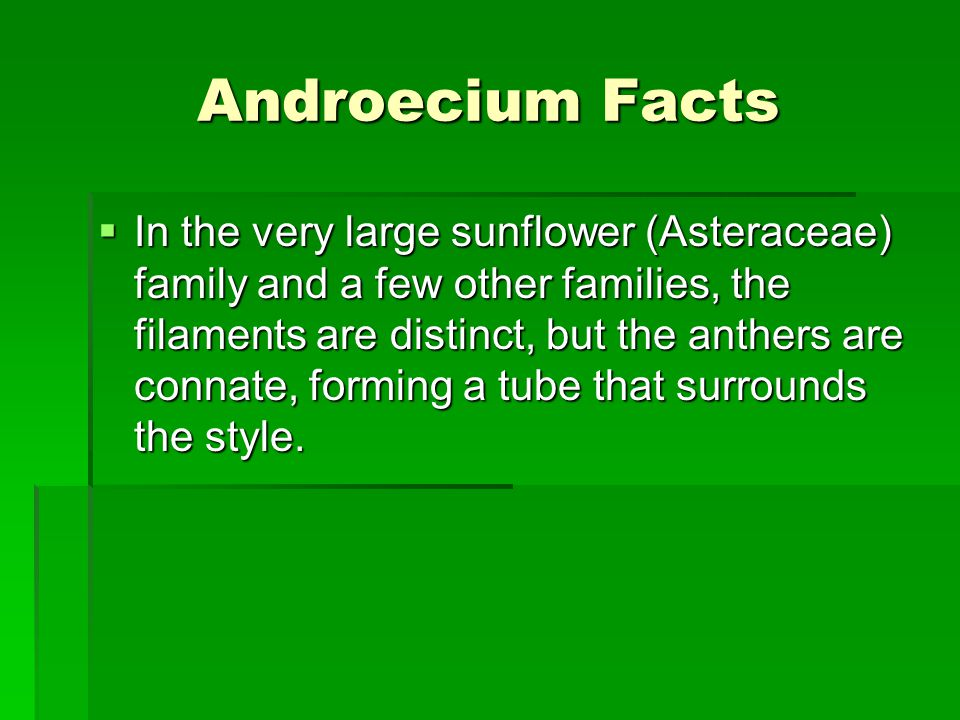 Androecium Facts  In the very large sunflower (Asteraceae) family and a few other families, the filaments are distinct, but the anthers are connate, forming a tube that surrounds the style.