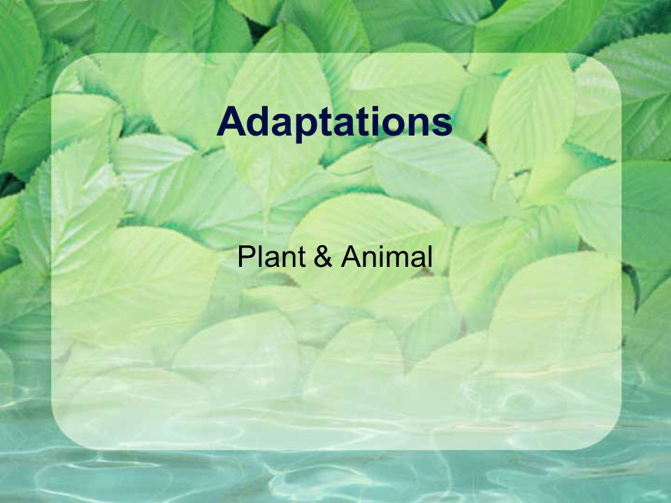 Adaptations Plant & Animal