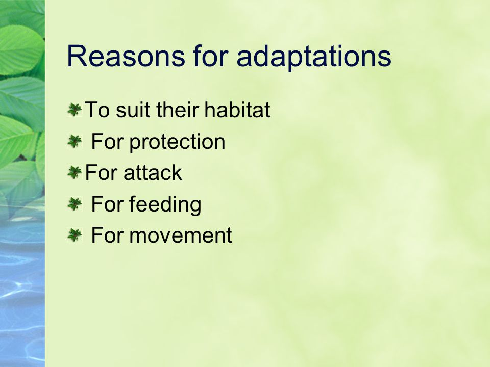 Reasons for adaptations To suit their habitat For protection For attack For feeding For movement