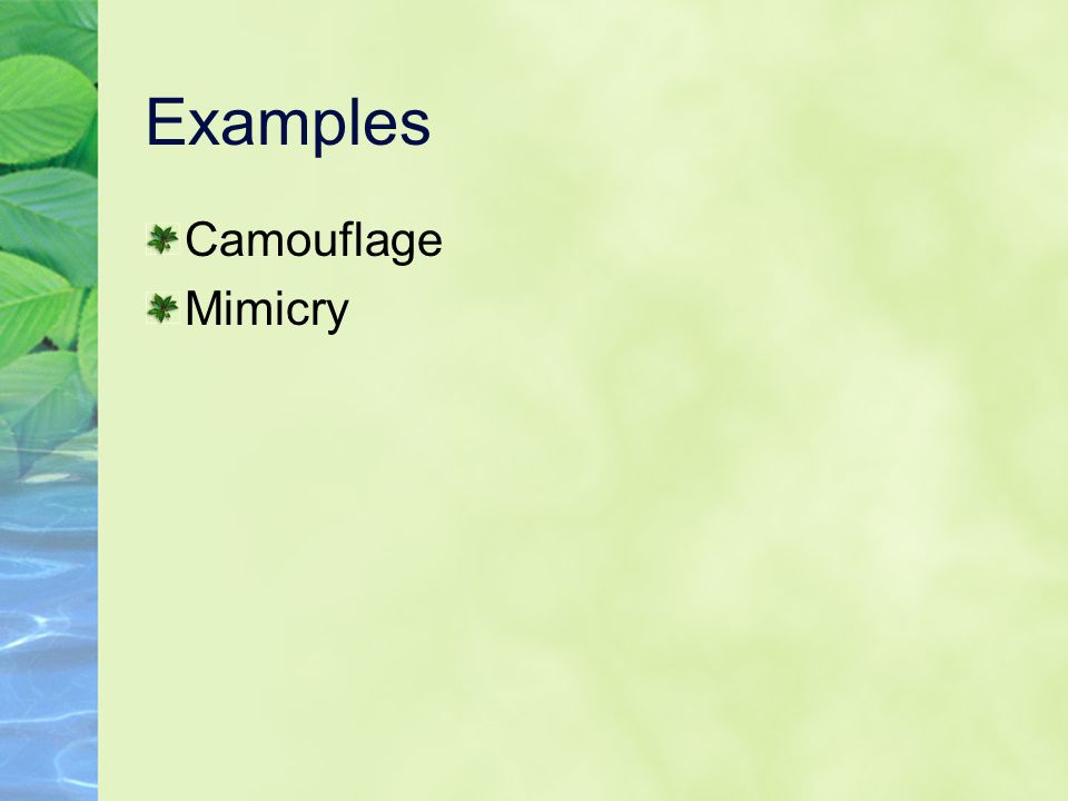 Examples Camouflage Mimicry