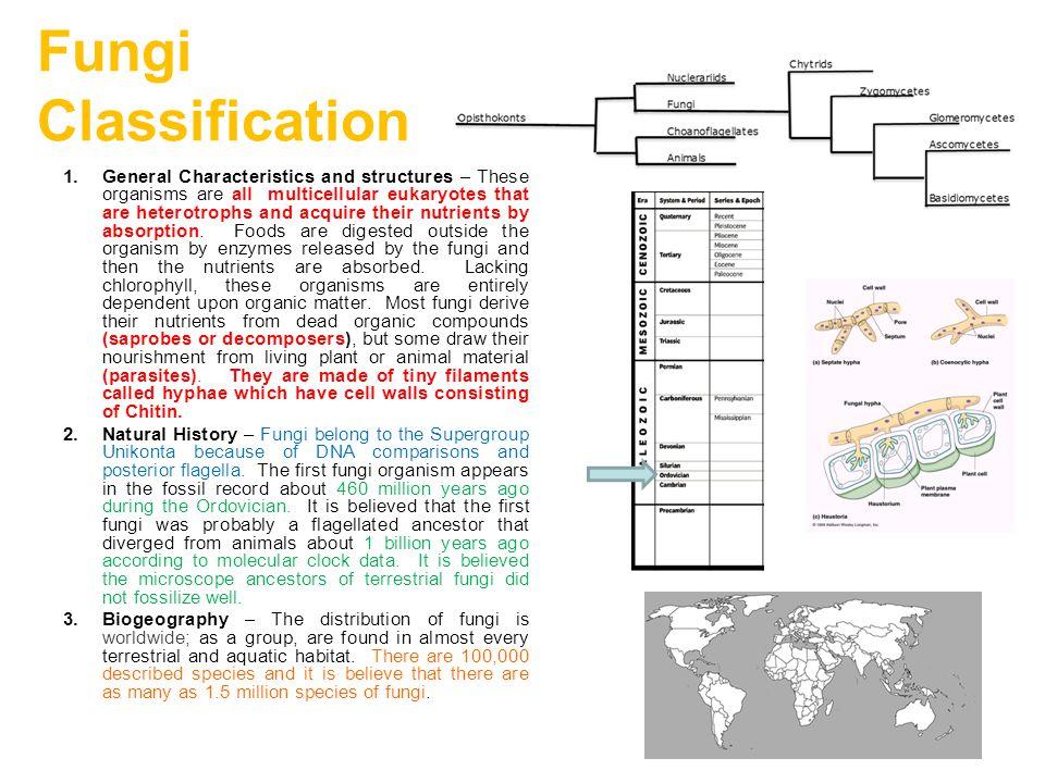 Kingdom: Fungi Division: Ascomycetes Ascomycetes reproduce asexually by condidia..