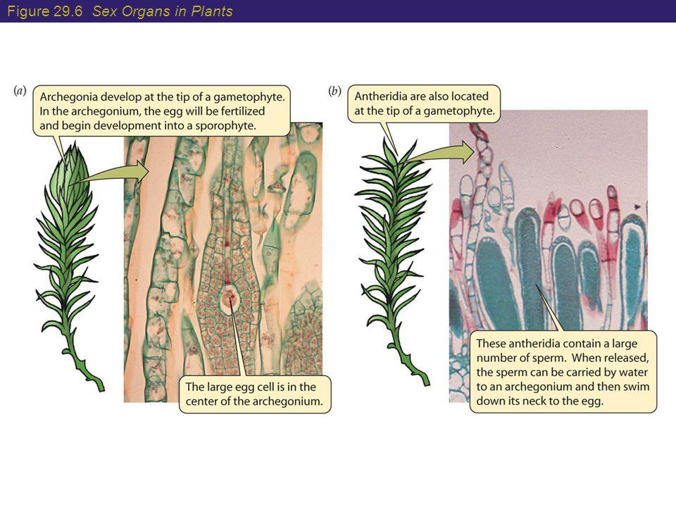 Figure 29.6 Sex Organs in Plants