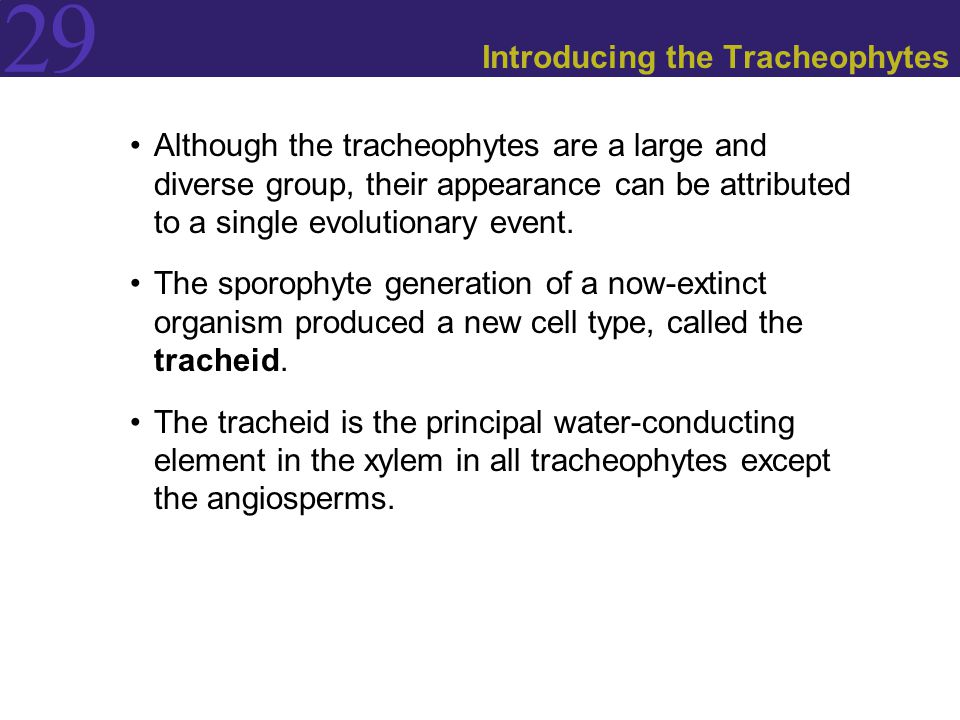 29 Introducing the Tracheophytes Although the tracheophytes are a large and diverse group, their appearance can be attributed to a single evolutionary event.