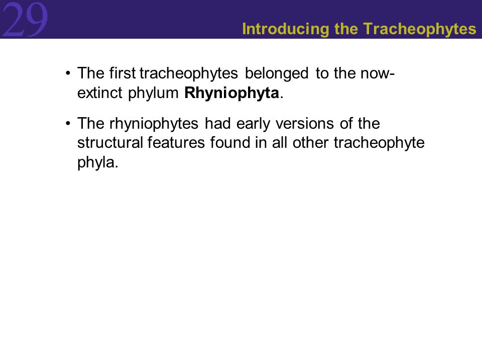 29 Introducing the Tracheophytes The first tracheophytes belonged to the now- extinct phylum Rhyniophyta.