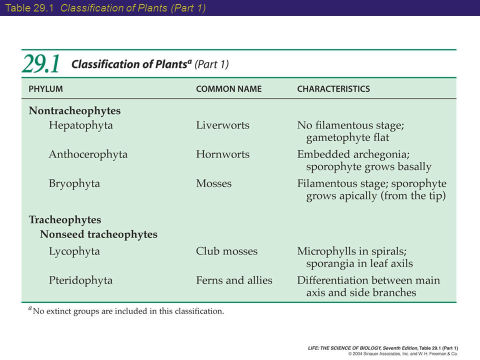 Table 29.1 Classification of Plants (Part 1)
