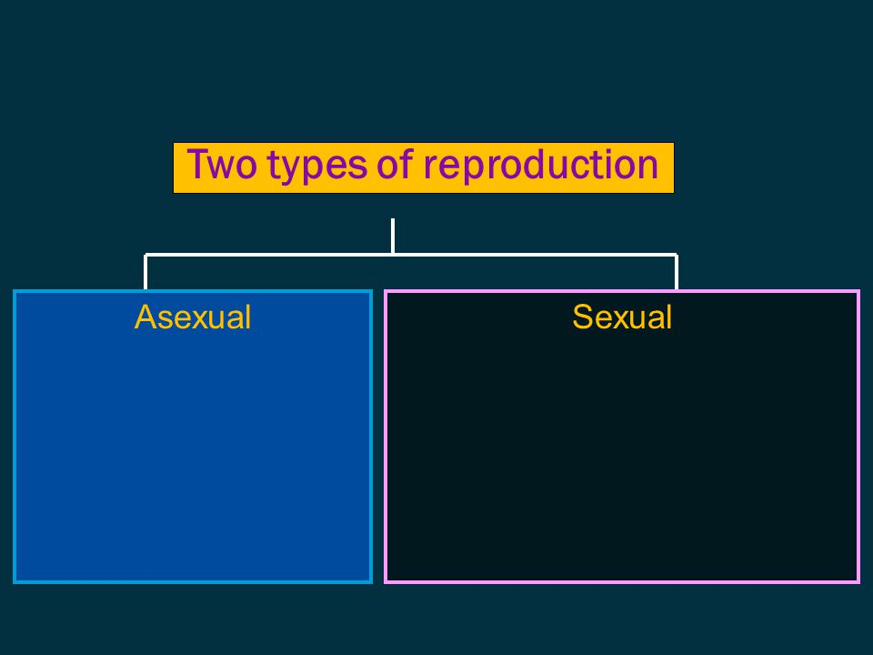 the process of producing offspring necessary for the continuation of a species Reproduction